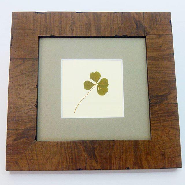 Trébol de cuatro hojas enmarcado - Esteve Enmarcadores (artesanos ...