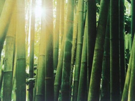 Bambú. Fotografía sobre tela.