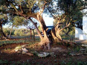 Olivo y Arte Natural