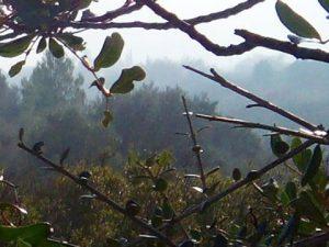 #niebla matinal desapareciendo con los primeros rayos del #sol La #naturaleza siempre acaba superando cualquier #obradearte Son instantes para conservar con los cinco #sentidos#arte #naturaleza #airelimpio #campo #tranquilidad